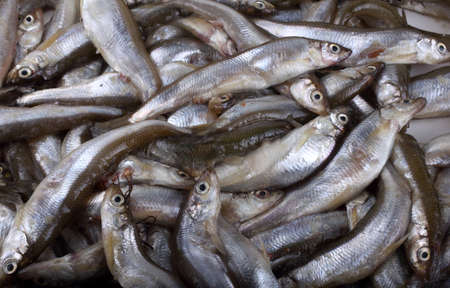 Smelt fishes catch close up Stock Photo