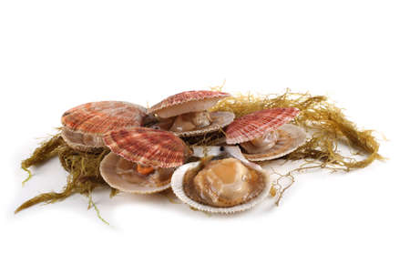 Scallops and alga isolated on white