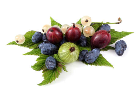 Gooseberry, currant and honeyberry on leaves
