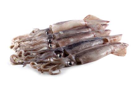 Squids. Fresh sea food