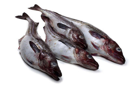 Alaska-Seelachs isoliert auf weiß