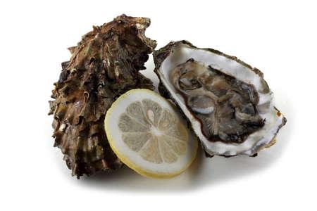 Auster, geöffnete Auster und Zitronenscheibe