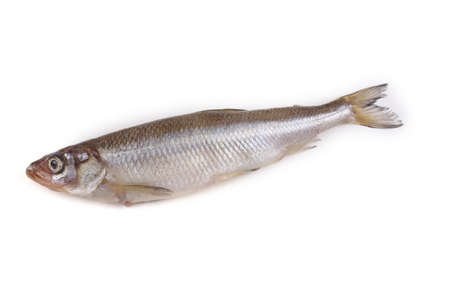 Smelt fish isolated on white. Pacific smelt variety Stock Photo