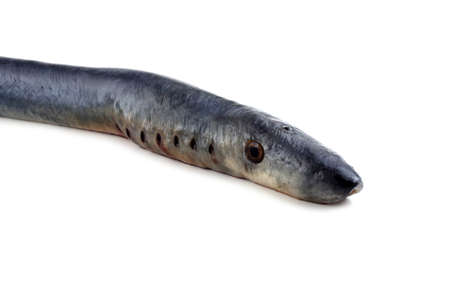 Lamprey fish. Vampire.. It stick to another fishes and drink its blood and eat meat. This fish is delicacy.