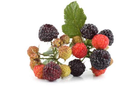 Black raspberry cluster (Rubus idaeus) Reklamní fotografie