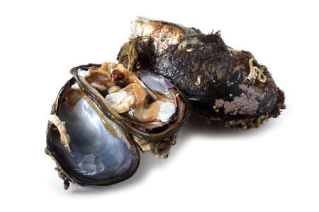 Opened mussels Stock Photo