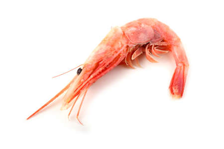 Shrimp isolated on white Archivio Fotografico