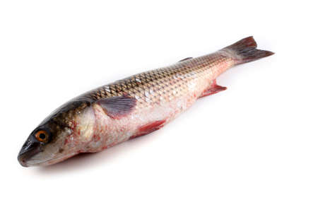 Pelengas fish isolated on white. Mullet variety