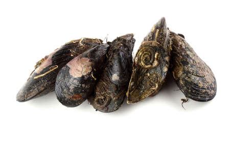 Mussels isolated on white. Sea food Archivio Fotografico