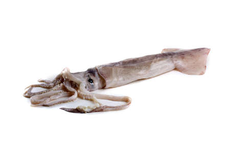 Squid isolated on white. Sea food Archivio Fotografico