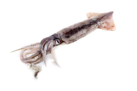 Squid isolated on white. Sea food Archivio Fotografico - 146845634