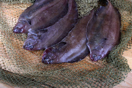 Korean flounders on net