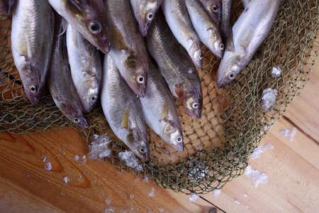 Saffron cod on net Banque d'images