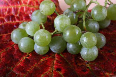 Grape on autumn leaf