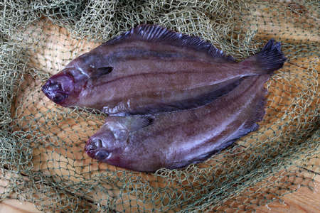 Korean flounders on net Stock Photo