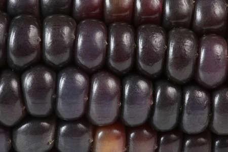 Black corn. Macro background. Very detailed