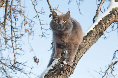 Portrait of fluffy gray cat on a tree with snow in the winter Imagens