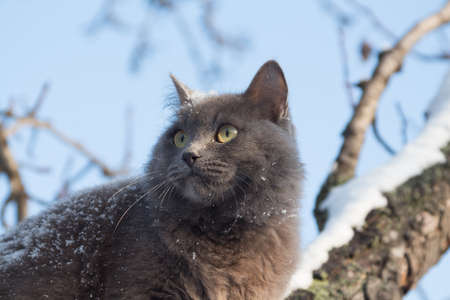 Portrait of fluffy gray cat on a tree with snow in the winter