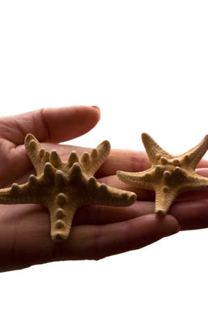Female hands with a rare starfish figure - dark isolated silhouette, concept of protecting animals from extinction Reklamní fotografie