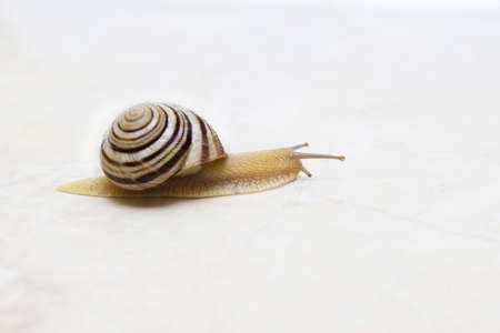 Snail close-up - studio shot, biology, wild life, male and female, food Banco de Imagens