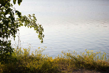 Shore with plants on the background of the water, a quiet lake - background pit 版權商用圖片