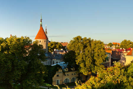 spires: Spires, Towers and Roofs of Old Tallinn among Greenery on a Summer Sunny Afternoon