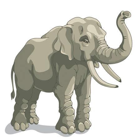 Éléphant sur un fond blanc Vecteurs