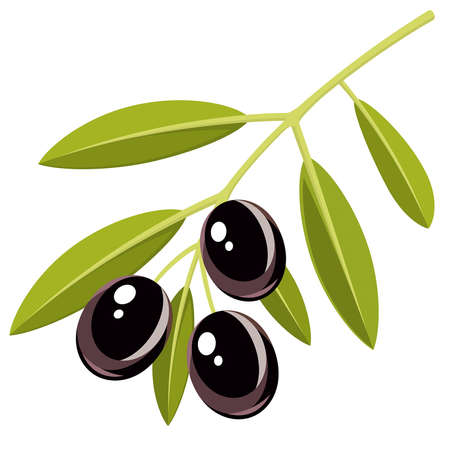 Branch of black olives with leaves Vector
