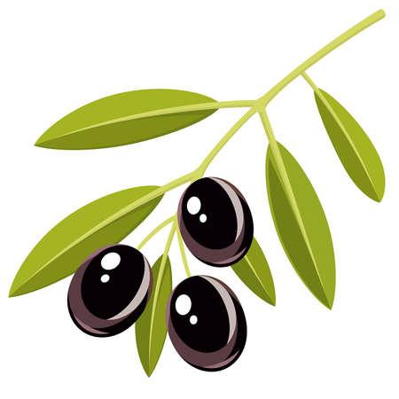 rama de olivo: Rama de aceitunas negras con hojas