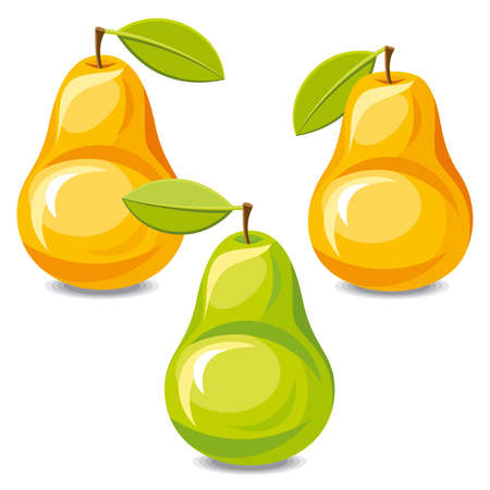 pear tree: Set of vector pears