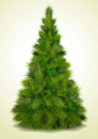 cartoon christmas tree: Christmas tree, realistic  illustration