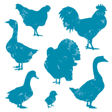 fowl: Poultry, farm birds silhouettes