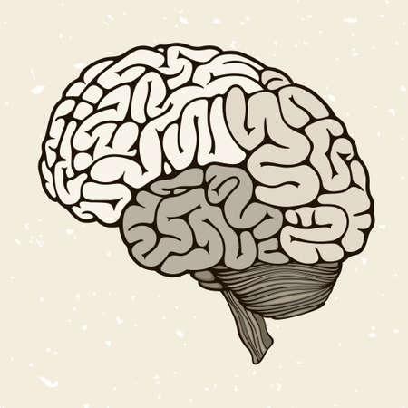 brain function: Human brain, vector illustration