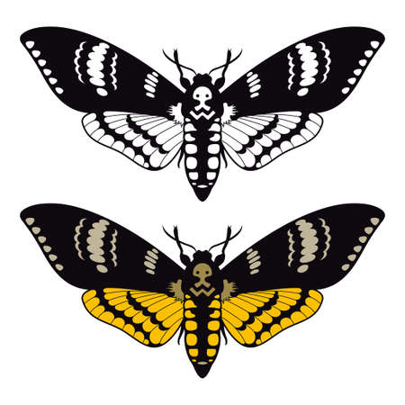 Death's head hawk moth, vector illustration