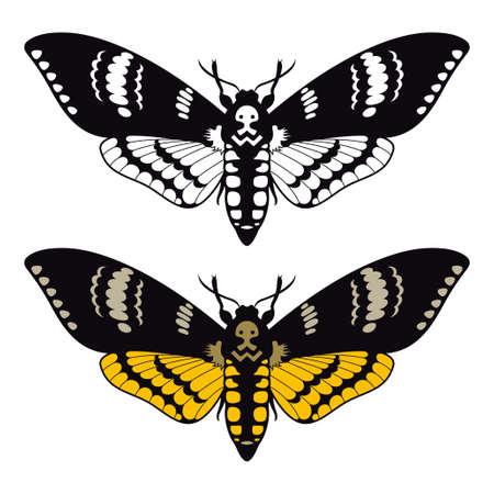 Deaths head hawk moth, vector illustration Illustration