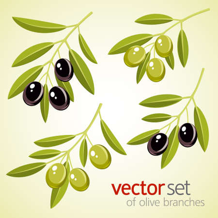 olive farm: Vector set of olive branches