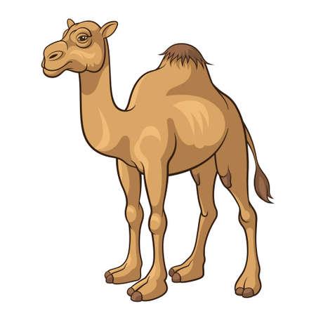 Cartoon kameel geïsoleerd op een witte achtergrond, vector illustratie