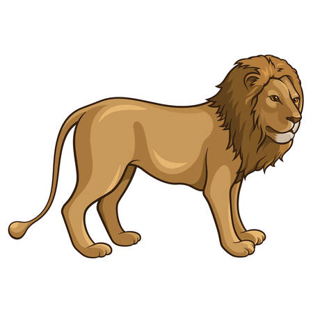 african cartoon: Illustration of an african lion isolated on a white  Illustration