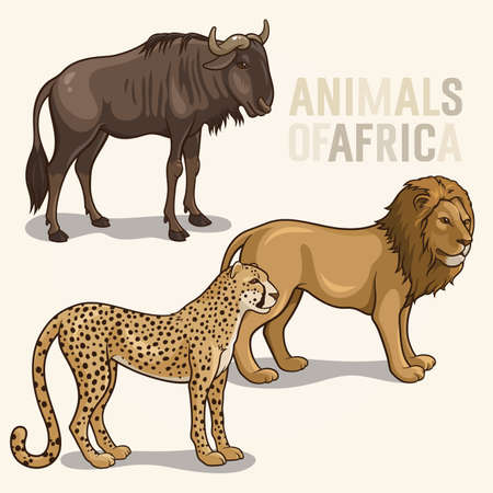 illustrations of african animals isolated on a light, lion, cheetah, wildebeest