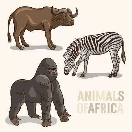 set of African Animals. Gorilla, buffalo and zebra Vector