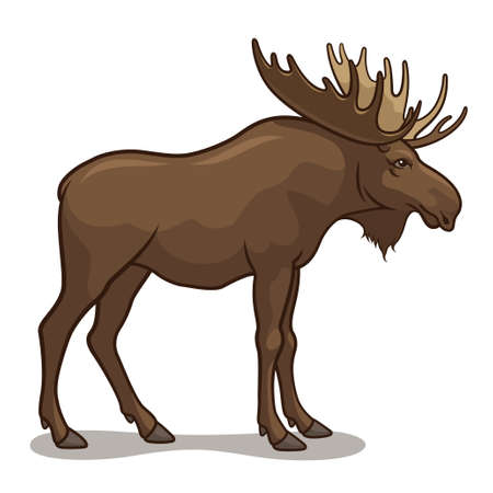 Vector illustration of a moose, isolated on a white background Vector