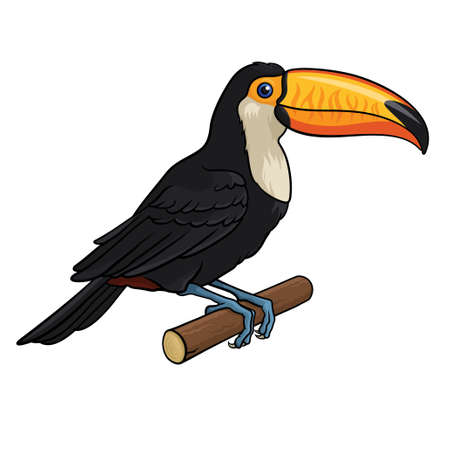 tucan: Vector illustration of a Toucan, isolated on a white background
