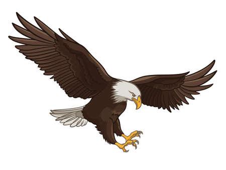 비행: 대머리 독수리의 벡터 일러스트 레이 션, 흰색 배경에 고립