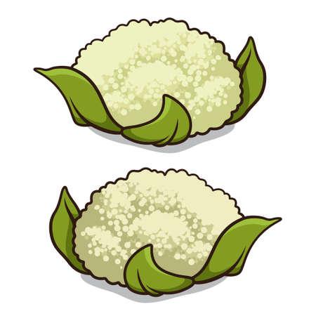 Cauliflower illustration isolated on a white background Ilustração
