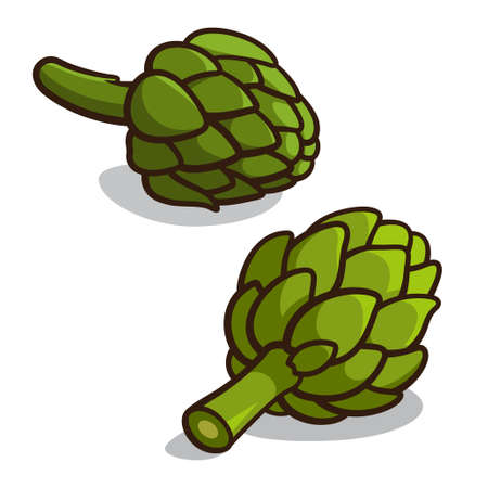 Vector illustration of artichokes isolated on a white background Vector