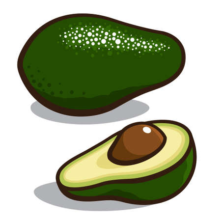 Vector illustration of an avocado isolated on a white background Vector