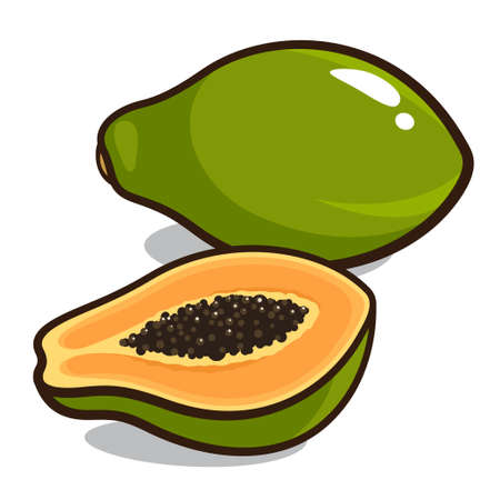 Papaya isolated on a white background Vector