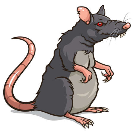 흰색 배경에 고립 된 쥐 그림