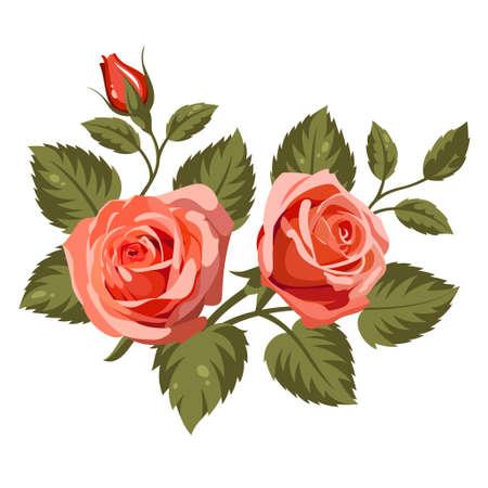 tea rose: Vector illustration of flowers isolated on white background