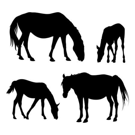 Vector silhouettes of horses and foals